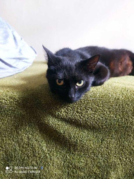 Młoda kochana kotka Queen do adopcji dla kochających ludzi
