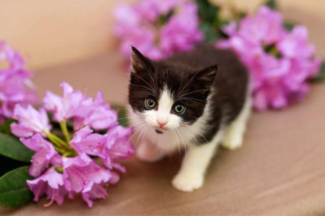 Cherry - miesięczna, pełna rozkoszy koteczka