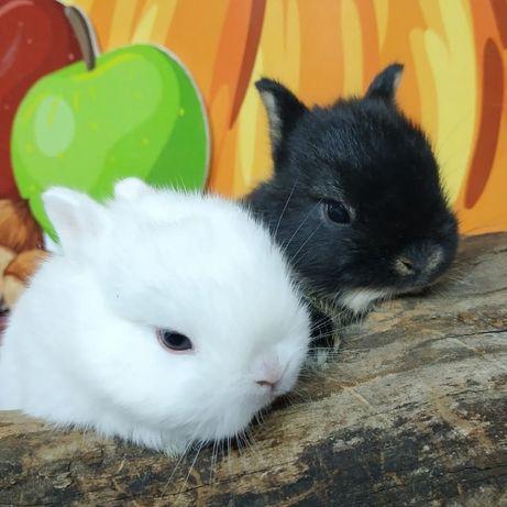 """Питомник карликовых кроликов """"BAMBY""""Kривой Pог"""