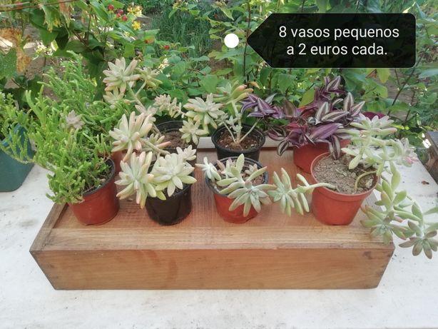 Venda de suculentas ( preço varia em função do tamanho dos vasos)