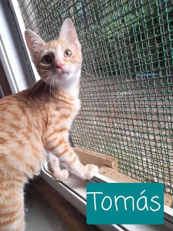 Tomás - Para Adopção