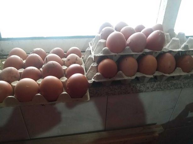 Ovos caseiros de galinhas do campo