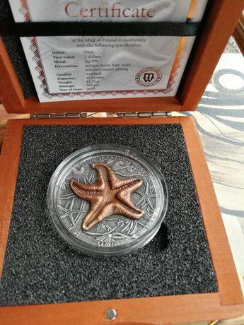 World Of Fossils - Starfish - pierwsza z serii