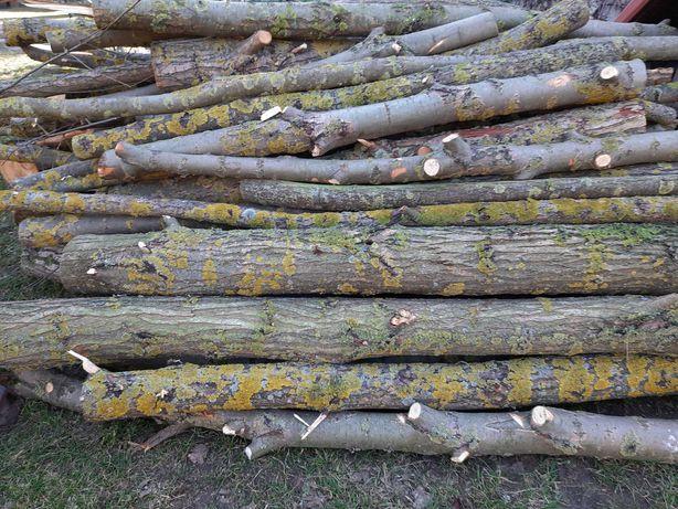 Drewno wierzbowe na opał - do pieca lub do kominka