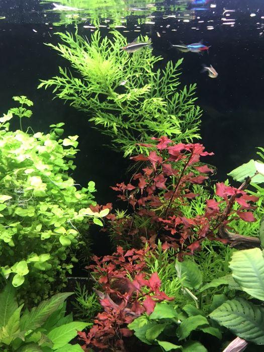 Rośliny z przycinki Częstochowa - image 1
