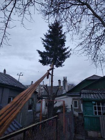 Спил,обрезка деревьев