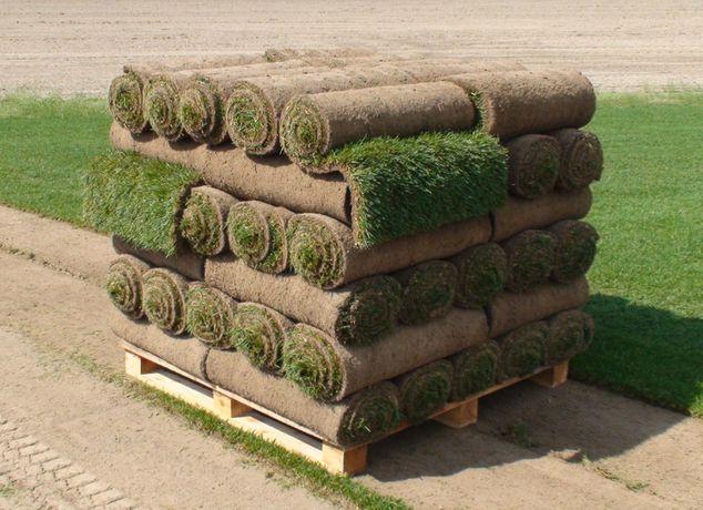 Trawa z rolki, darń, trawnik, trawnik rolowany.