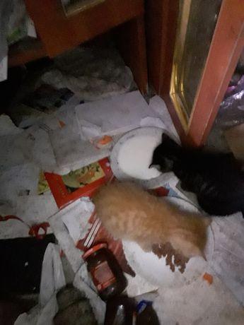 Kotki koty kocurki chłopcy