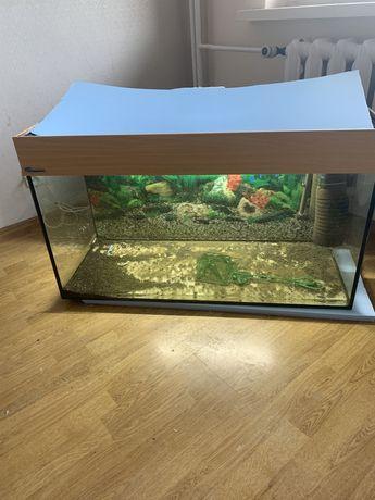Akwarium 200 litrow