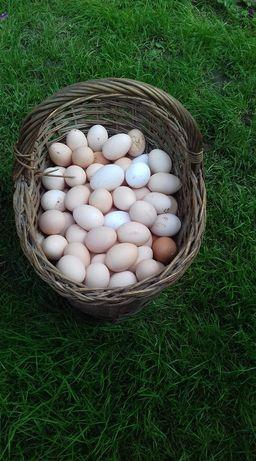 Jaja, jajka wiejskie z wolnego wybiegu.