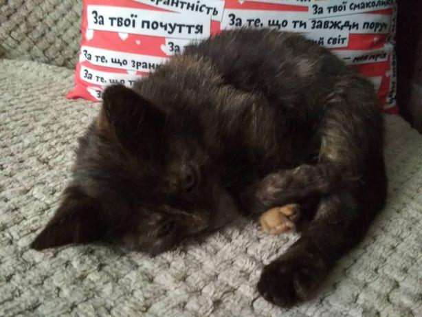Котенок кот кошка в добрые руки, трехцветная