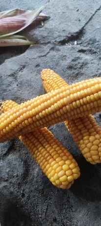 Kolby kukurydzy , lub w ziarnach