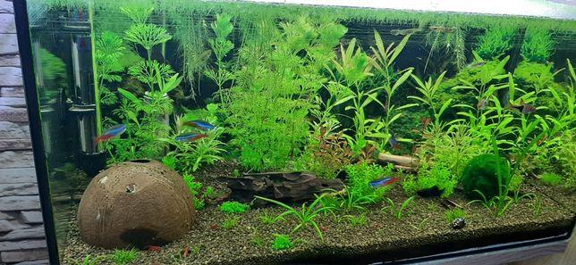 Sprzedam roślinki akwariowe zestaw