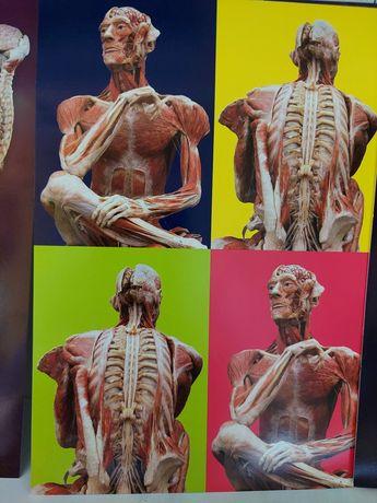 Body Worlds- Pocztówka