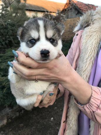 Супер щенки в продаже)