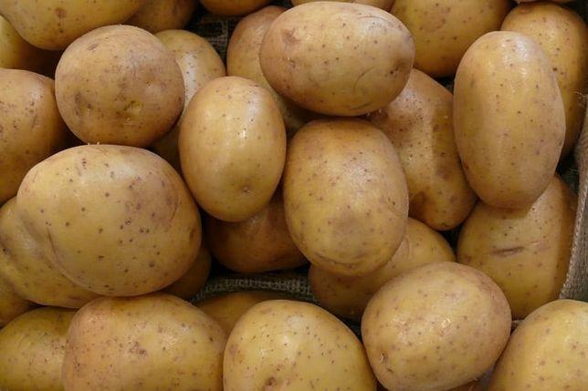 Sprzedam ziemniaki Julinka i vinieta