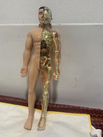 Corpo humano 3D desmontavel