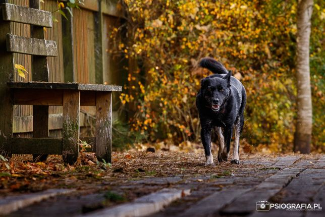 Pola kochana psina czeka na dom