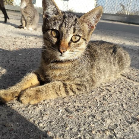 Котенок девочка 3 мес, стерильна