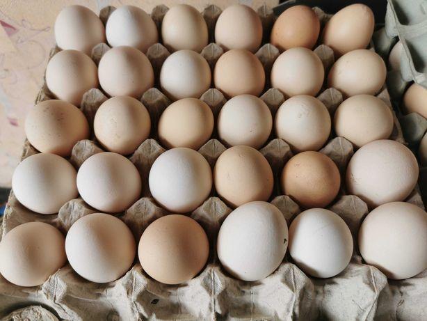 Świeże jajka wiejskie, wolny wybieg, smaczne!
