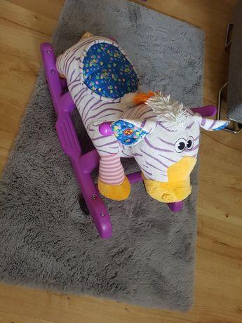 Bujak jeździk zebra grająca