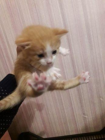Котятки подрасиают и ищут дом