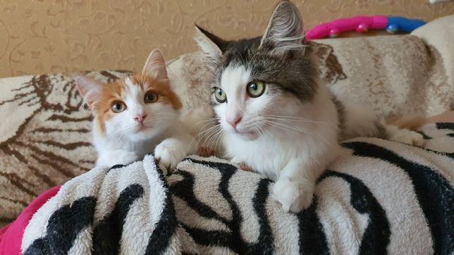 котята, две девочки 4 мес.