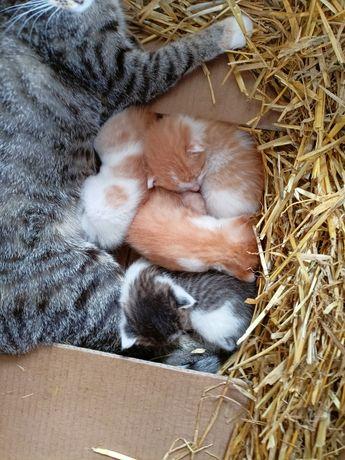 Małe śliczne kotki