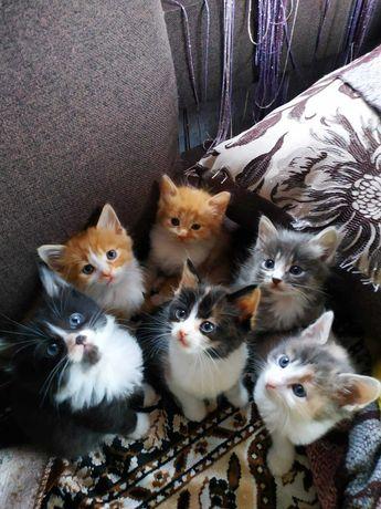 Кошеня у добрі руки