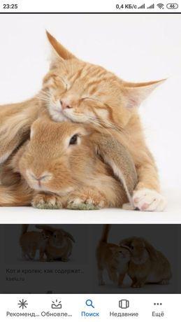Кастрация кроликов и котов (в условиях карантина)
