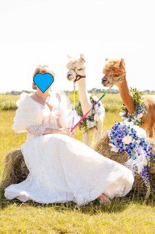 Amerykańska suknia ślubna koronkowa L / XL 42 44 etola z piór marabuta