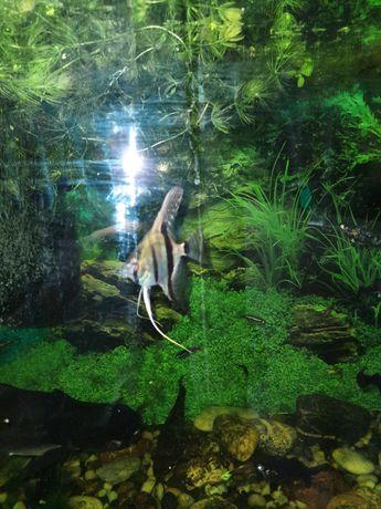 Ładne zielone roślinki zamienię na rybki