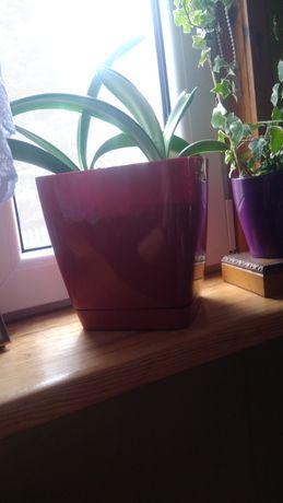 Doniczki plastikowe kwadratowe