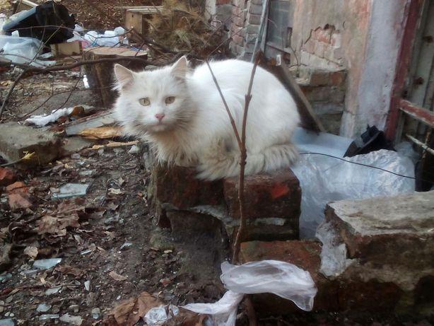 Отдам белого пушистого кота