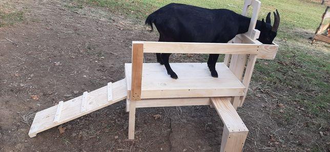 Доильний станок,станок для дойки коз овец