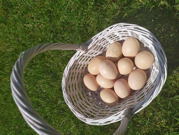 Jaja kurze, jajka świeże, wiejskie 100% ekologiczne