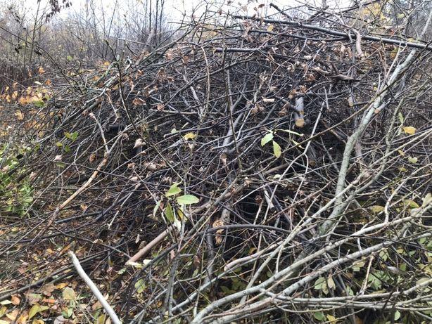 Oddam gałęzie i drzewo po wycince - liściaste