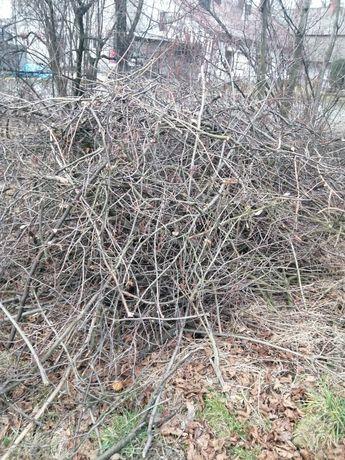 Suche gałęzie za darmo