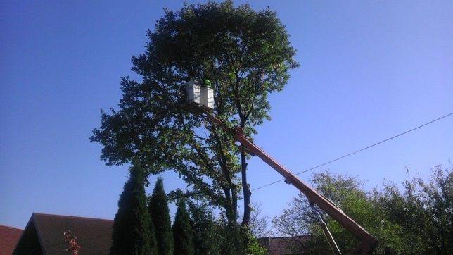 Wycinka drzew podcinka drzew usługi zwyżką rębakiem frezarką mulczerem