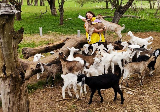 Kozy młode 50 % AN, 75 % AN, 83% AN anglonubijskie