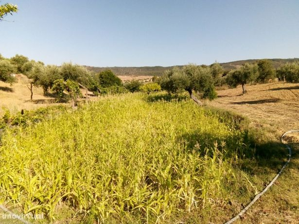 Terreno com água abundante