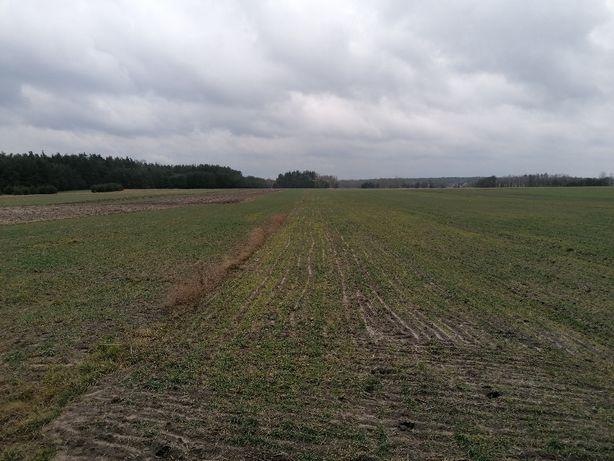 Pole orne 0,53 ha