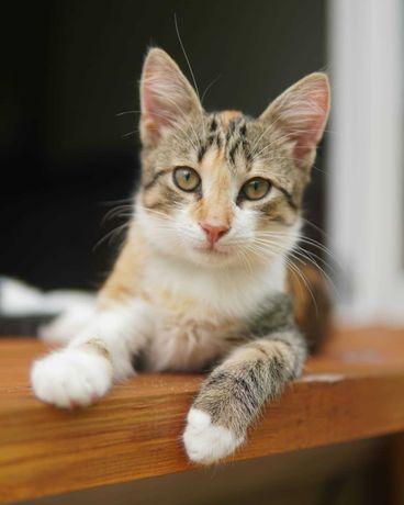 Маленька кішка, 4 міс.