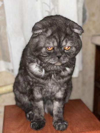 Кот Шарпи ищет кошку