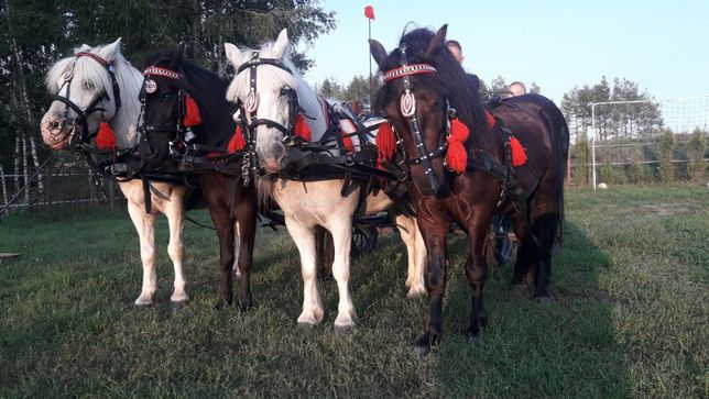 Przejażdżki bryczką kuce kucyki jazda konna kuligi kulig powóz konny