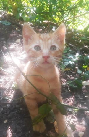 Котенок Рыжик 3 месяца ищет семью