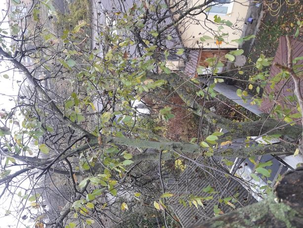 Услуги недорого розпиловка дерево на дрова