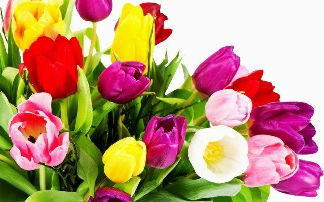 Луковицы тюльпанов тюльпана