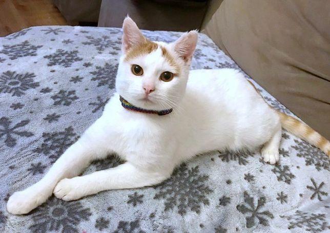 Filemonek - przytulaśny młody koteczek :)