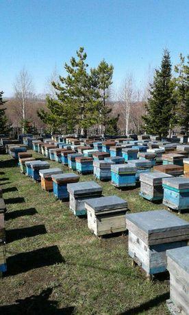 Немецкой Ассоциации Пчеловодов СARNICA F1. Бронирование на апрель